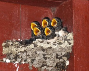Baby-Birds-wild-animals-4636213-800-641