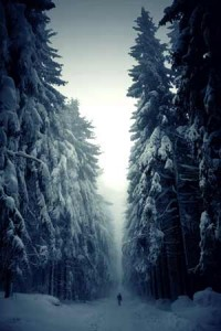 solitary_walker_in_a_white_forest