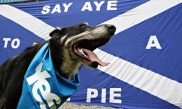 Scottish independence: dog with a yes campaign flag around its neck