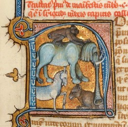 Animal N St. Albert the Great, De animalibus, Paris 14th century